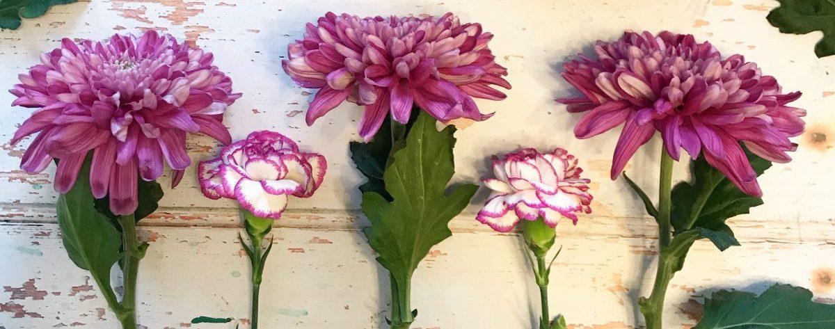 Blooming Niki